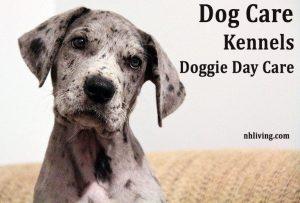 NH Dog Care