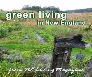 Green Living New England, Going Green for Healthy Holidays