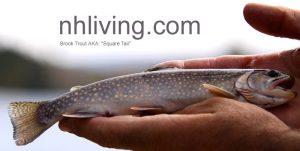 brook-trout-lrg