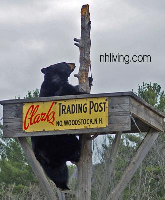 Clarks Trading Post NH