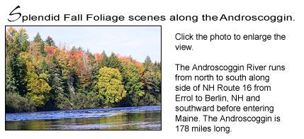 fall-foliage-ed-andro