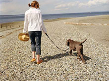 traveling with pets, Pet Travel,