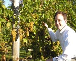 NH Candia Vineyards