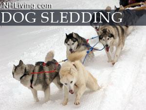 NH dog sled rides