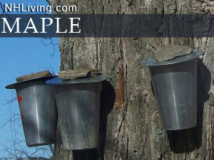 New Hampshire Maple Sugaring