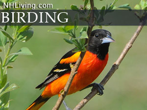 new hampshire bird watching vacations