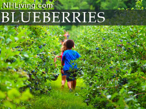 new hampshire you pick blueberry farms