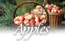 New Hampshire apple orchards