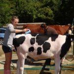 Hillsborough County NH Agricultural Fair
