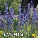 NH Top Events