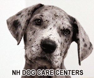 NH Dog Care