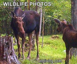 NH Wildlife Photo Tour
