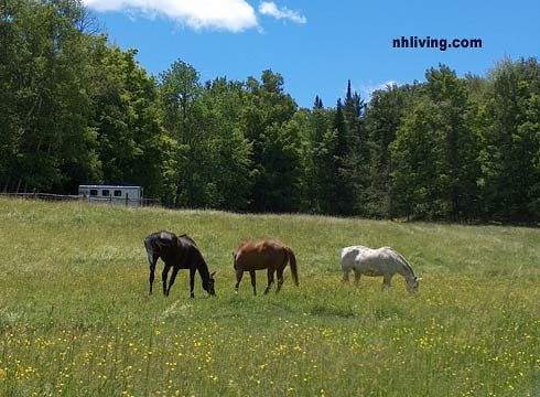 Visit NH Living Springtime Horses in Field
